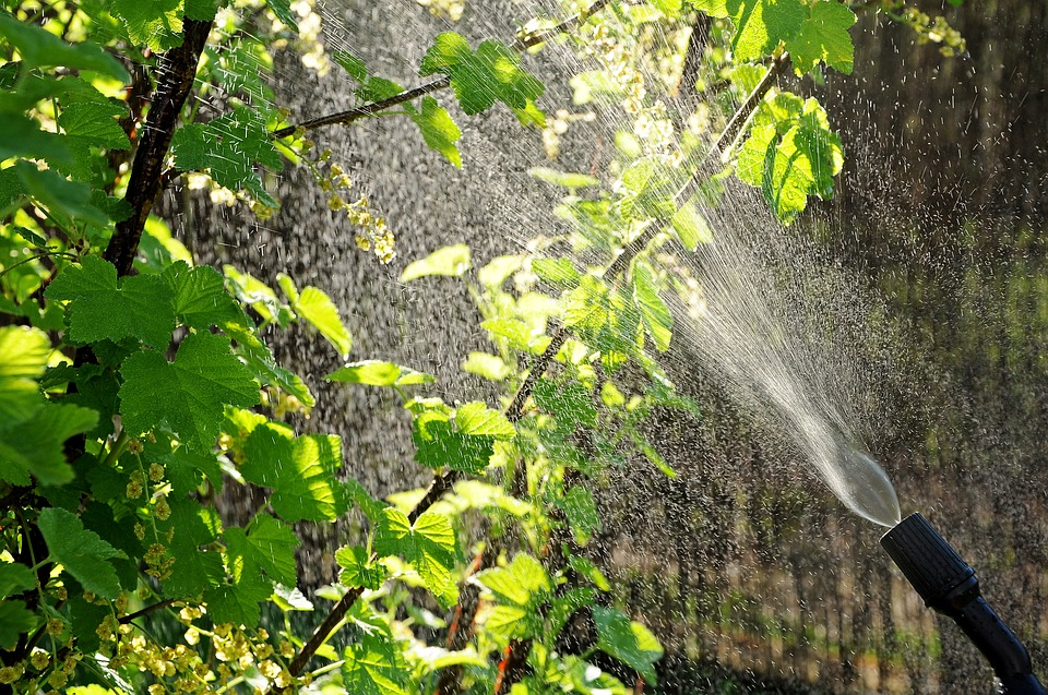 Merkblatt Herbizide an Wegen und auf Plätzen
